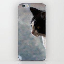 Soft Portrait of Cat iPhone Skin