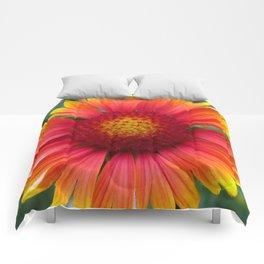 Gaillardia Comforters