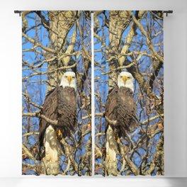 Bald Eagle (9279) Blackout Curtain