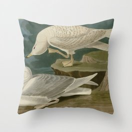 282 White winged silvery Gull Throw Pillow