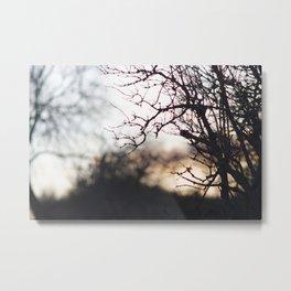 Sunset through trees Metal Print