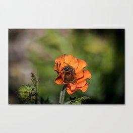 Bee Butt Canvas Print