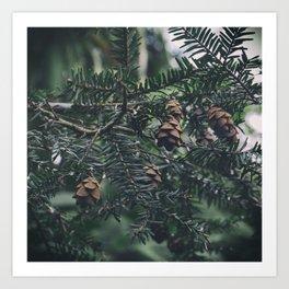 Mini Pinecones Art Print