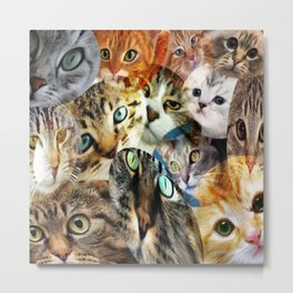 Crazy Cat Person Metal Print