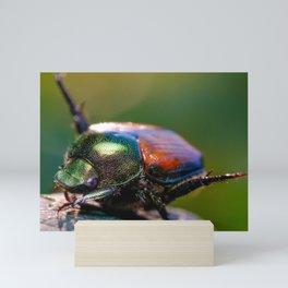 Beetle Yoga. Japanese Scarab Beetle Macro Photograph Mini Art Print