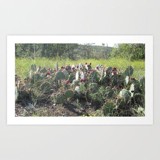 Texas Cactus Art Print