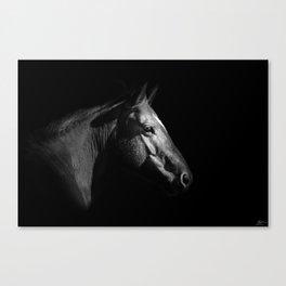 BW Work Horse Canvas Print