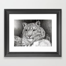 The Snow Leopard 2nd  Framed Art Print