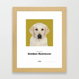 Project 100 Dogs Gabby the Golden Retriever Framed Art Print
