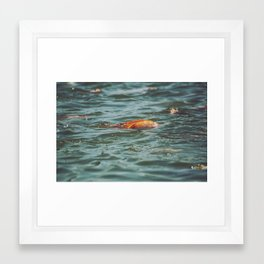 Fish, Borneo Framed Art Print
