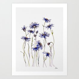 Blue Cornflowers, Illustration Art Print