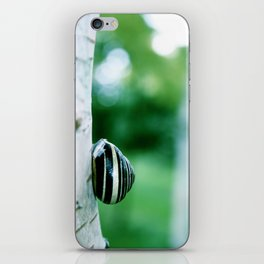 Snail on Silver Birch iPhone Skin