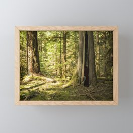 Trees Along the McKenzie River Trail, Spring, No. 1 Framed Mini Art Print