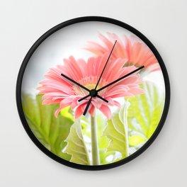 Gerber Daisies Flower Wall Clock