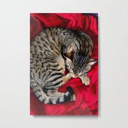 Cute Tabby Cat napping Metal Print