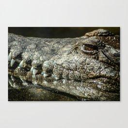 Lurk Canvas Print