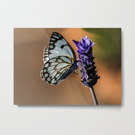 Caper White Butterfly Metal Print