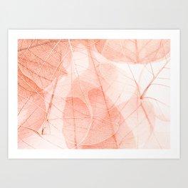 Sun Bleached Apricot Art Print