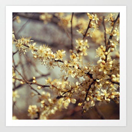 Sunny Cherry Blossom  Art Print