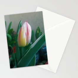 The NewBorn Stationery Cards