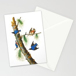 White-breasted Black-capped Nuthatch Bird Stationery Cards