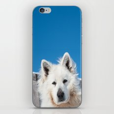 White Husky iPhone & iPod Skin