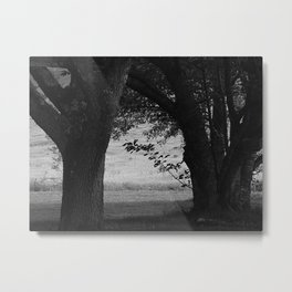 Between the Trees (in Black and White) Metal Print