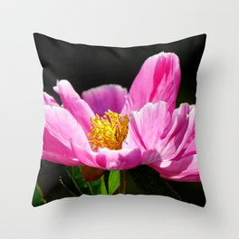 Pink Peony with Dark Background Throw Pillow