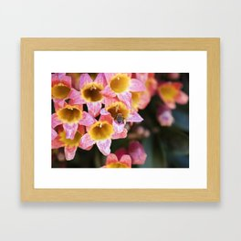 Tangerine Beauty Cross Vine with a Bumblebee Framed Art Print
