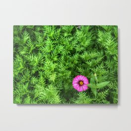 Top view of Yellow cosmos or Sulfur cosmos bush with a blooming pink Zinnia flower. Metal Print