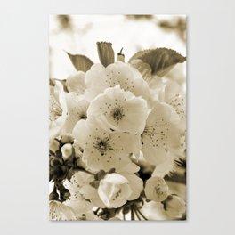 Cherry Blossoms Monochrome Canvas Print