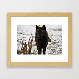 Wolves II  Framed Art Print