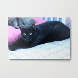 Spooky the Black Feral Halloween Sanctuary Cat Metal Print