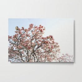 Cherry Blossoms in Paris Metal Print