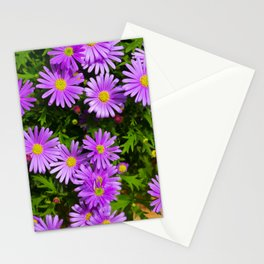 Floral background, purple daisy Marquerite, Felicia amelloides, Lila Kapaster. Multicolored spring Stationery Cards