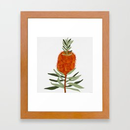 Bottlebrush Flower - White Framed Art Print