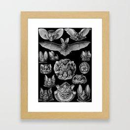 1904 Haeckel Chiroptera Framed Art Print