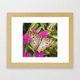 White Peacock Butterfly on Flowers Framed Art Print