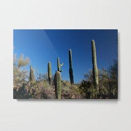 Saguaro Cactus at Picture Rocks I Metal Print