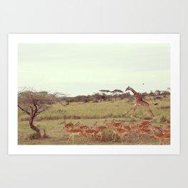 Jackal moves in Art Print