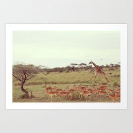 Jackal moves in Art Print