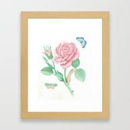 Rose and Butterflies Framed Art Print