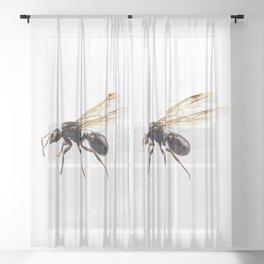 Black Winged garden ant species lasius niger Sheer Curtain