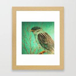 Bird Staring Framed Art Print