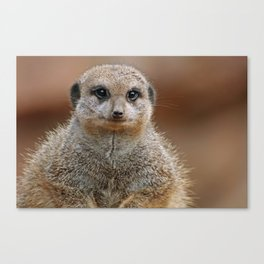 The Meerkat - Africa wildlife Canvas Print