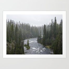 Yellowstone Forest - Nature Photography Art Print