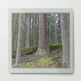 BIG FOREST Metal Print