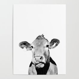 Cow photo - black and white Poster
