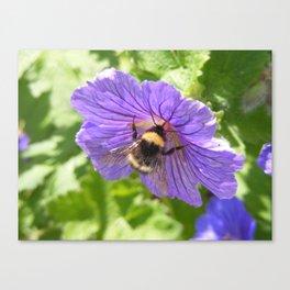 Purple Pollen Canvas Print