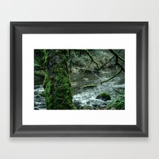 Oldgrowth Framed Art Print